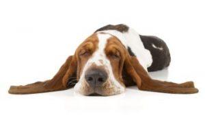 Teamfähige zuverlässige Bewerber langweilig wie schlafender Hund
